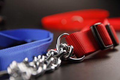 Nylon collars and leashes
